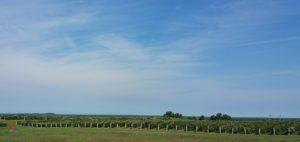 michigan-grapes-for-wine-renespoints-blog-puremichigan-joy-7