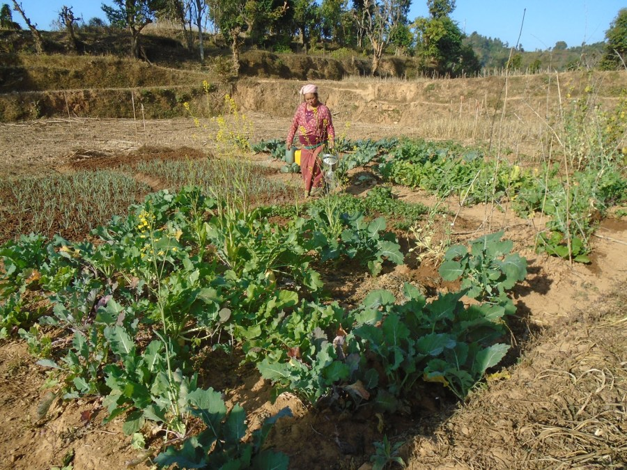 Hum Kamari walking and watering her crops.