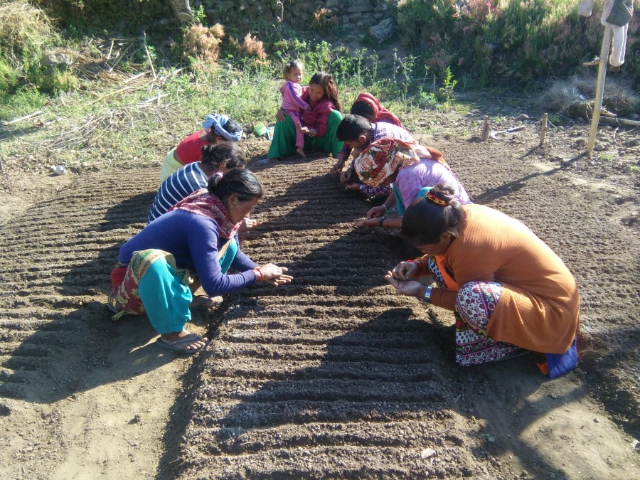 A group of women plant seeds in a patch of ground.