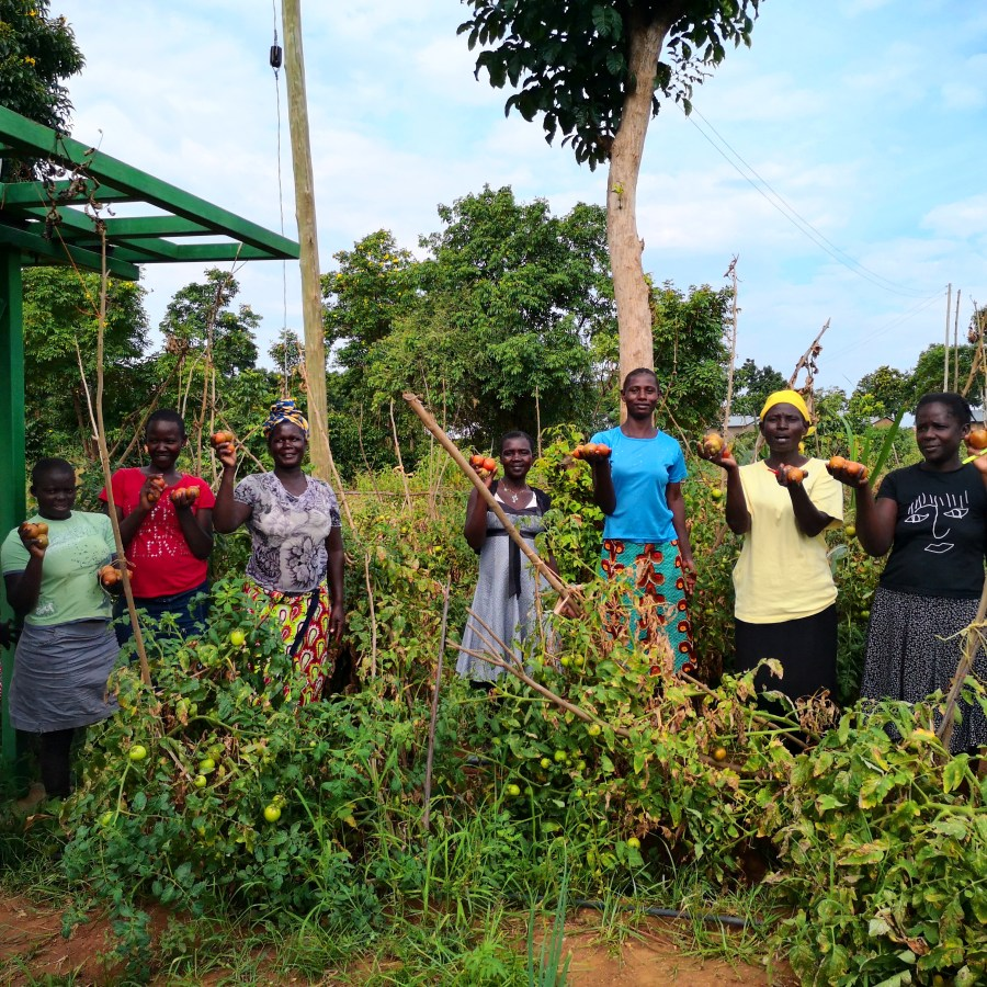 A group of women in Kenya showing their tomato crops
