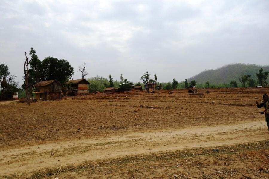 A field showing Sanneghari during the dry season.