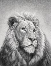 0-3-life-the_lion_of_judah