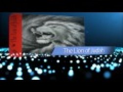 1 Lion thumb