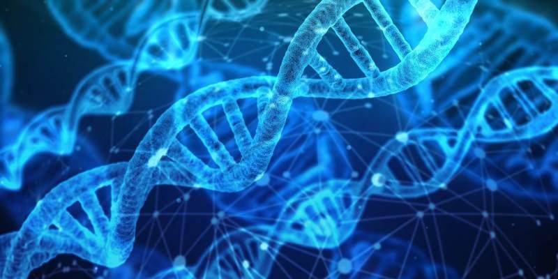 Gender Identity Test True Sexual Identity In Chromosomes