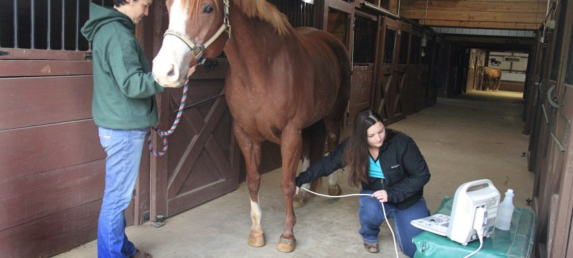 Equine Digital Ultrasound