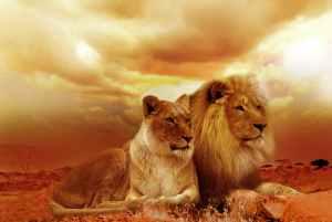 lions, clouds, focus