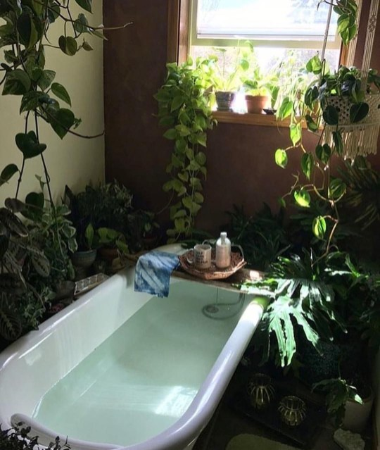 Lovely House Plants In The Bathroom11