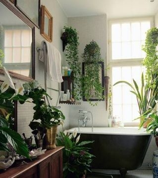 Lovely House Plants In The Bathroom12