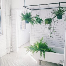 Lovely House Plants In The Bathroom28