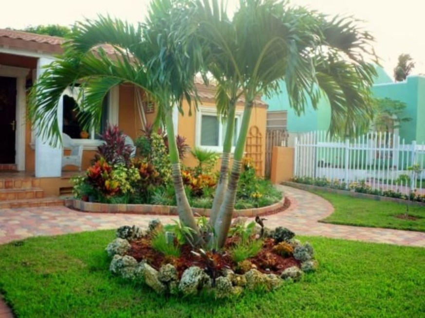 Palm Trees In The Front Yard 07