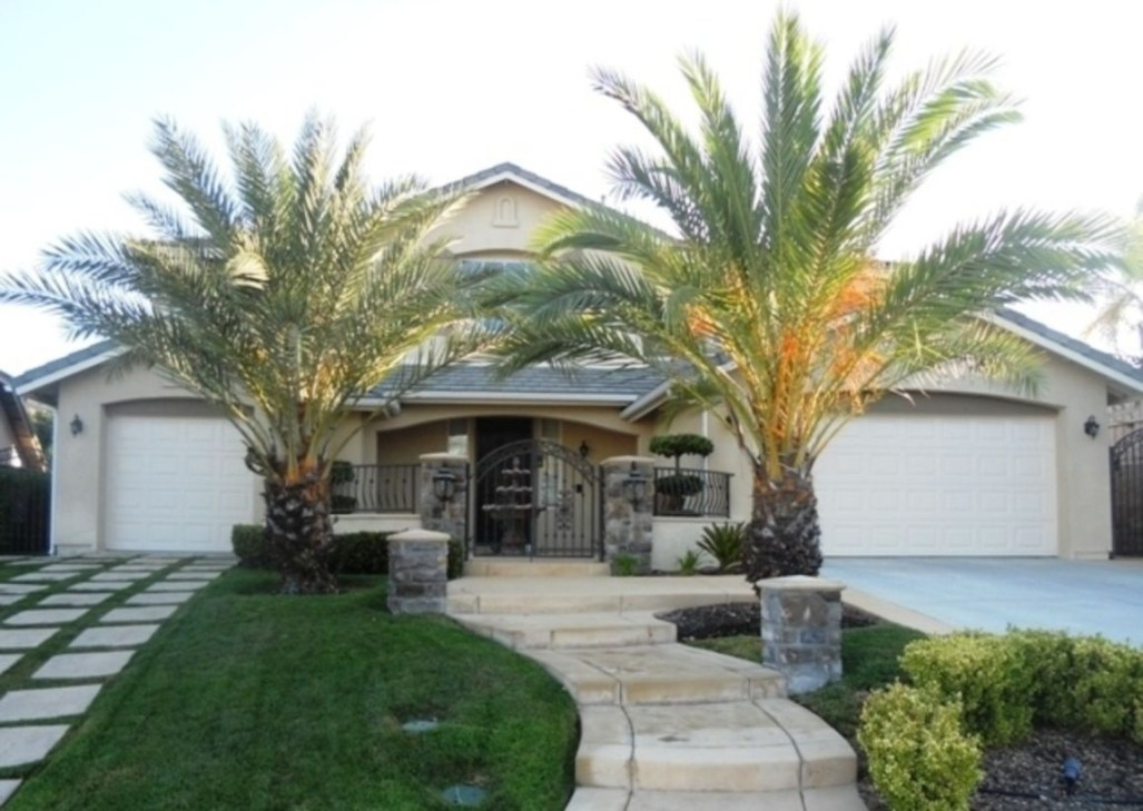 Palm Trees In The Front Yard 09