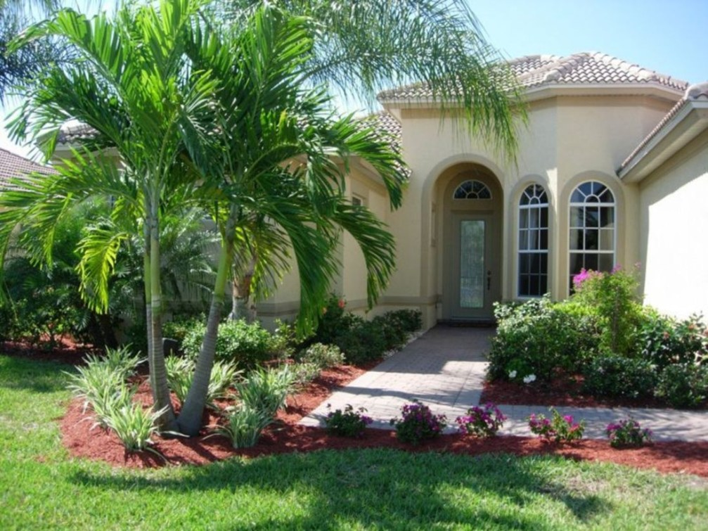 Palm Trees In The Front Yard 16