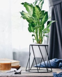 Plant Stand Design For Indoor Houseplant 01
