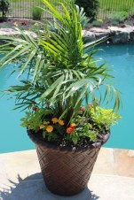 Suitable Plants Grow Beside Swimming Pool 16