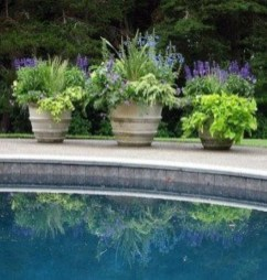 Suitable Plants Grow Beside Swimming Pool 27