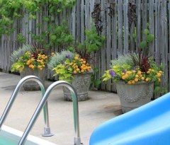 Suitable Plants Grow Beside Swimming Pool 30