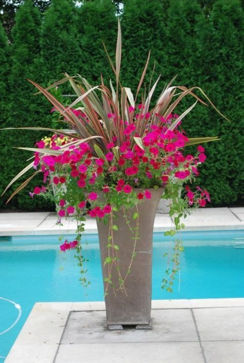 Suitable Plants Grow Beside Swimming Pool 31