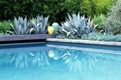 Suitable Plants Grow Beside Swimming Pool 35