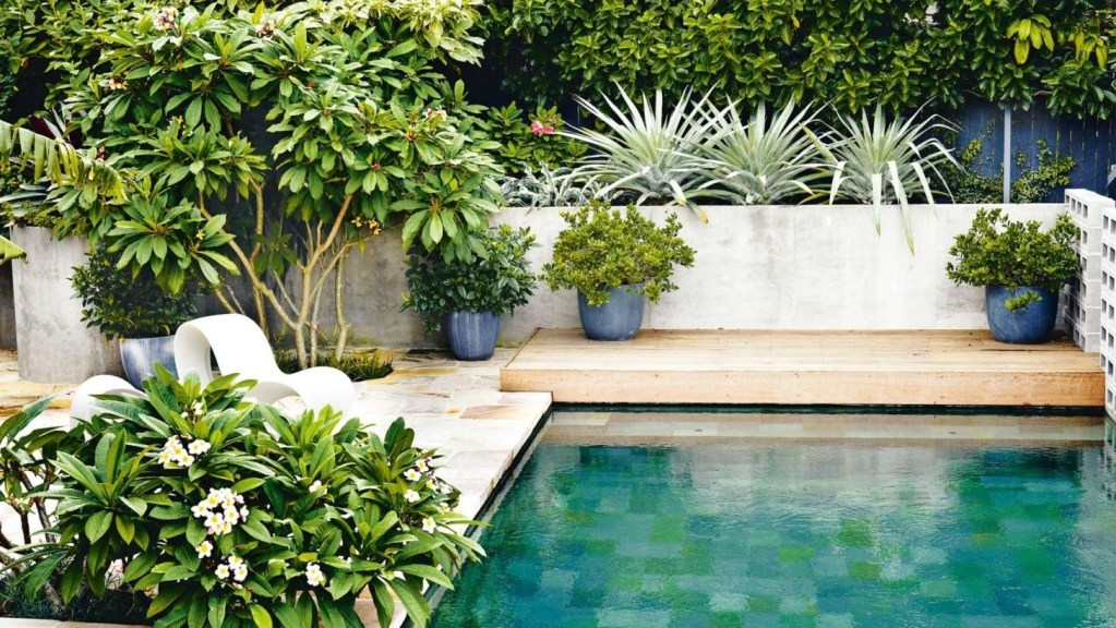 Suitable Plants Grow Beside Swimming Pool 45
