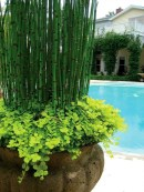 Suitable Plants Grow Beside Swimming Pool 48
