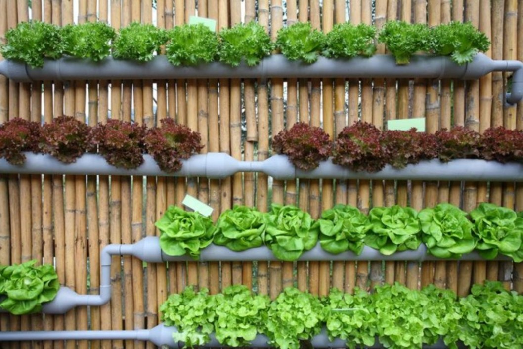 Vertical Vegetable Garden Ideas To Inspire You 20