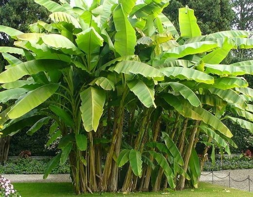 Tropical Plantation Ideas You Can Try In Your Garden09