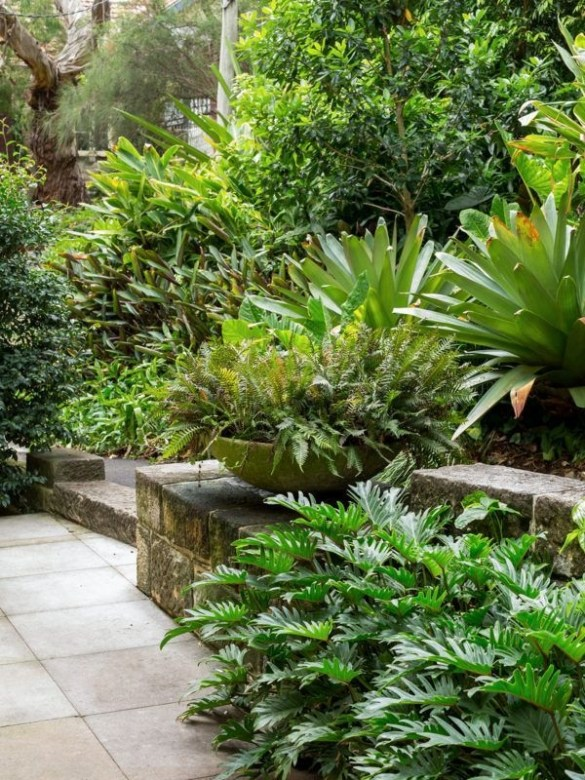 Tropical Plantation Ideas You Can Try In Your Garden15