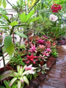 Tropical Plantation Ideas You Can Try In Your Garden17
