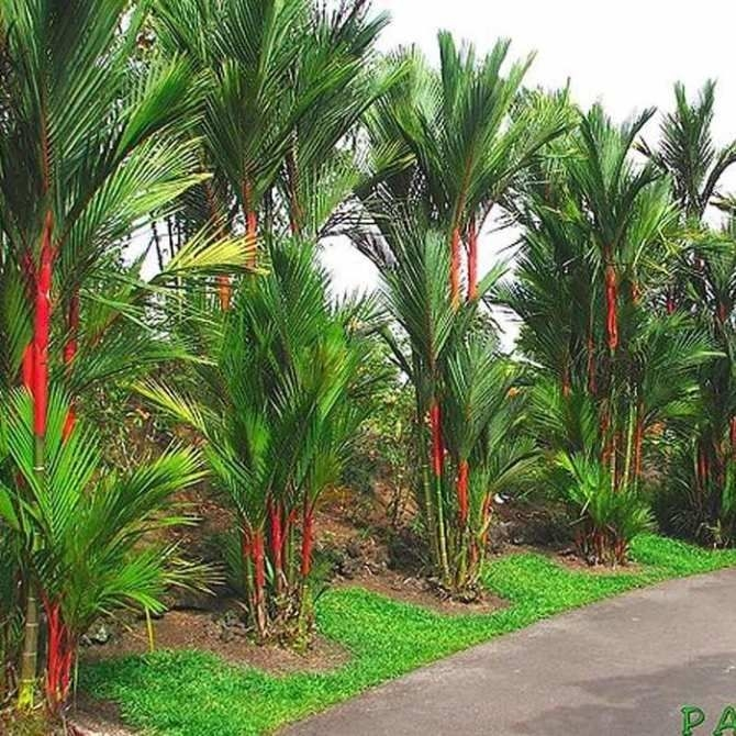 Tropical Plantation Ideas You Can Try In Your Garden27