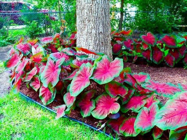 Tropical Plantation Ideas You Can Try In Your Garden29