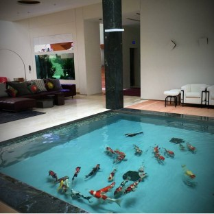 Amazing Indoor Fish Pond To Upgrade Your House 31