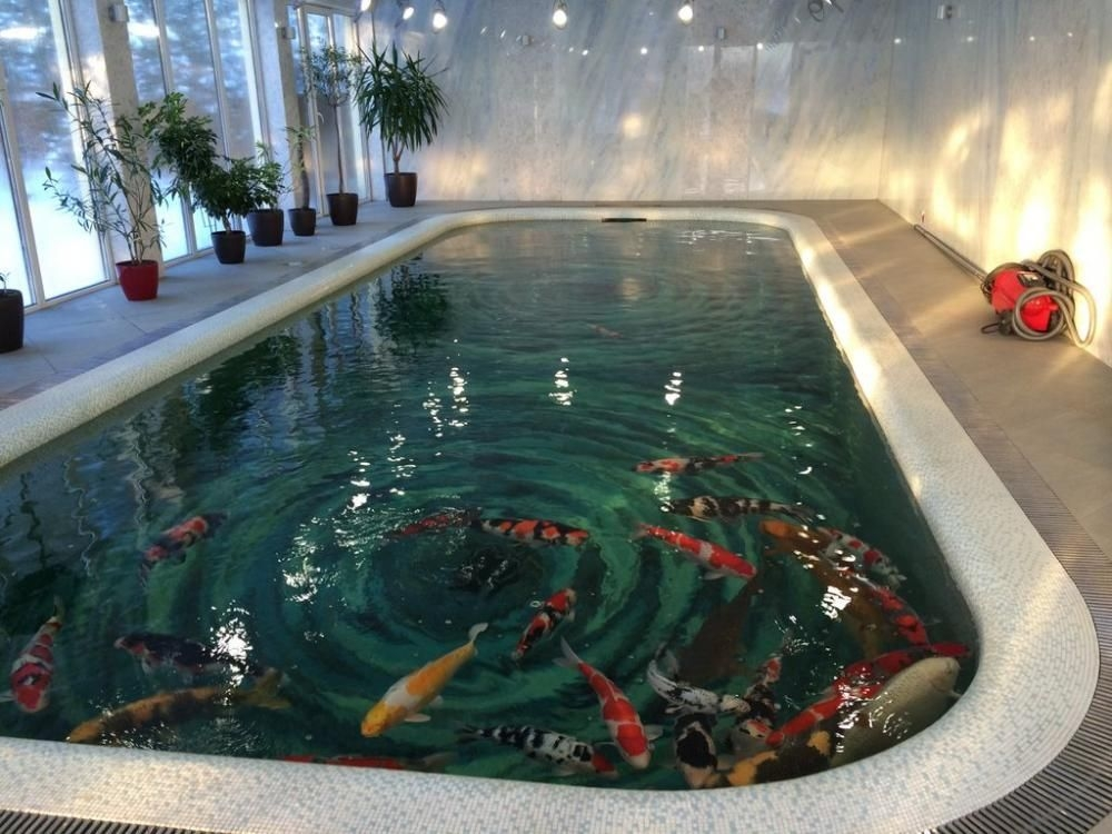 Amazing Indoor Fish Pond To Upgrade Your House 36