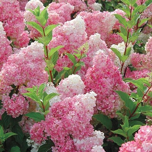 Tips For Growing Spring Flower You Can Try 04
