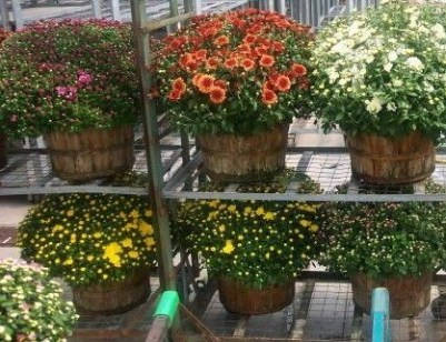 Tips For Growing Spring Flower You Can Try 11