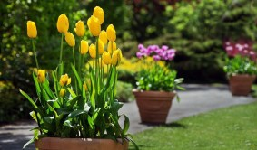 Tips For Growing Spring Flower You Can Try 13
