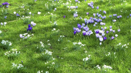 Tips For Growing Spring Flower You Can Try 24