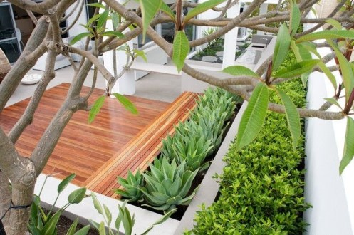 Best Planting Aloe Vera Ideas In Your Terrace 04