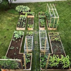 Inspiring Vegetable Garden Design For Your Backyard 14