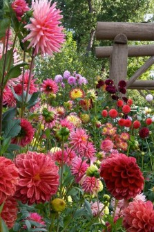Beautiful Flower Garden Idea You Can Try 12