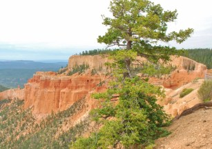 View from the Rim of the Canyon