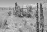 Fences attest to the mixed use of the area as cattle range and park