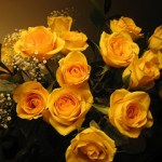 yellow-rose_2