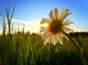 慰め・励ましの花言葉