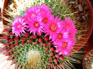 cactus_1