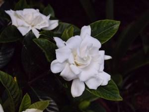 5月6日の誕生花