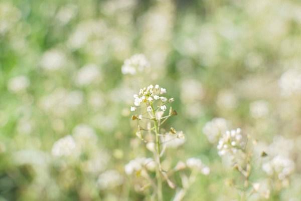 ナズナの花言葉