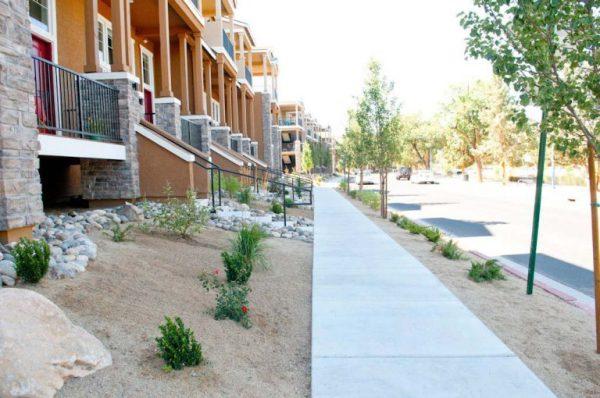 choosing drought tolerant plants