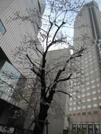 cerisier-tokyo-renoma