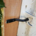 お庭の木製ドア交換と便利なウエスタンラッチ