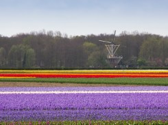 C1 Dutch Colour_Helen Renouf